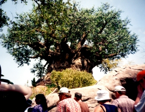The Tree of Life and the newly opened Animal Kingdom- 1999