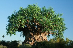 The Tree of Life at Animal Kingdom Park